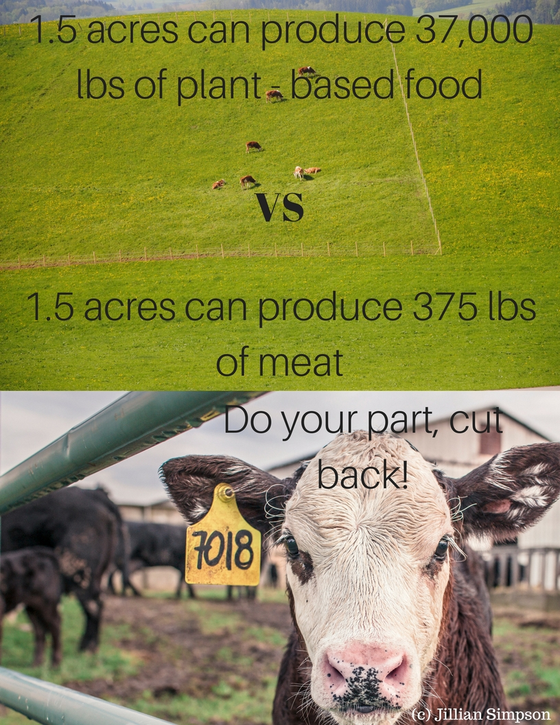 1.5 acres can produce 37,000 lbs of plant - based food