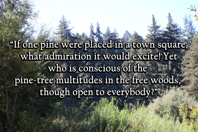 Quotes John Muir And The Sierra Club
